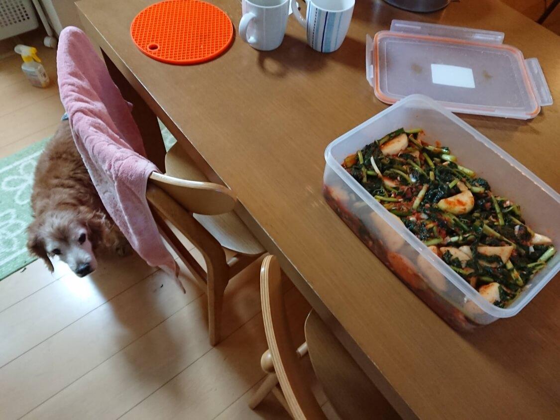 大根の葉入り!カクテキキムチの韓国レシピ。ヤンニョム(味付け)の完成