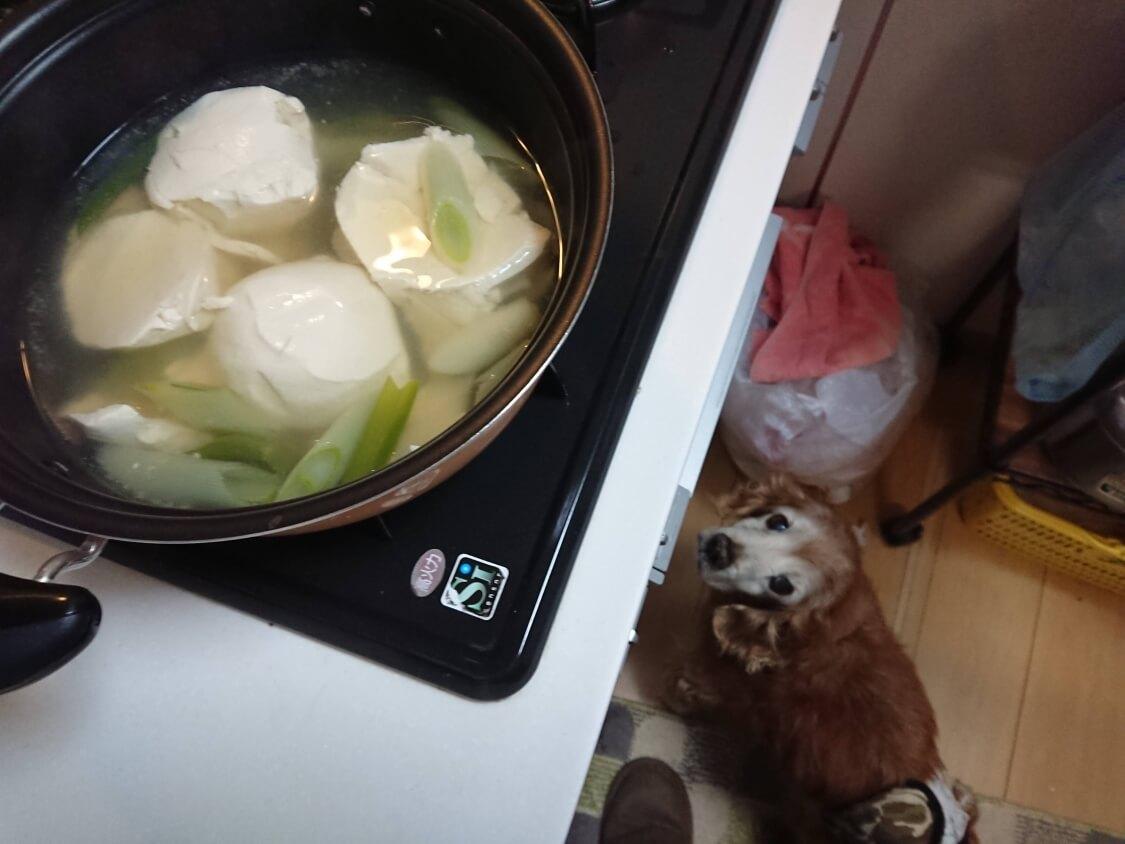 ダシダを入れた湯豆腐