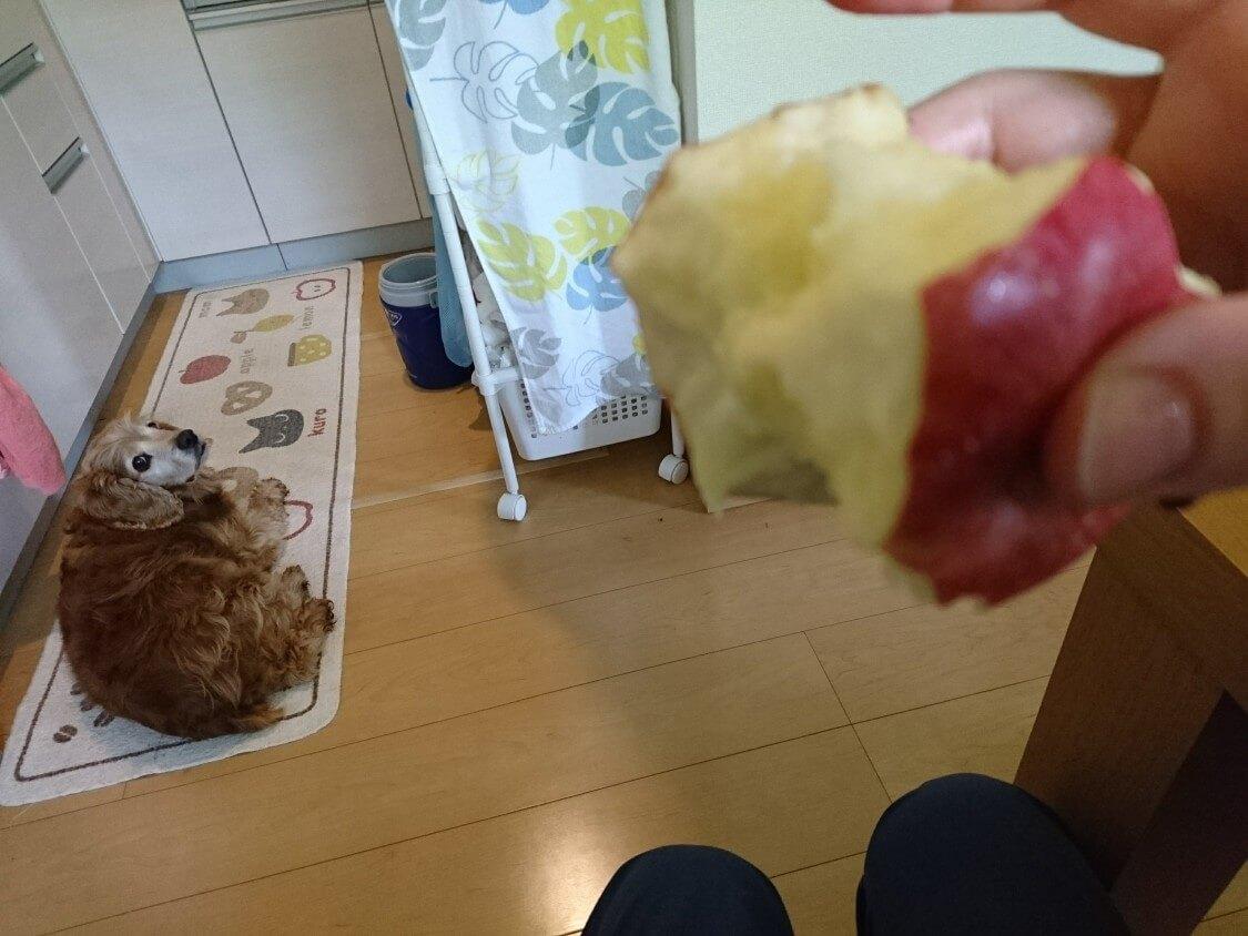 りんごとマシューの思い出